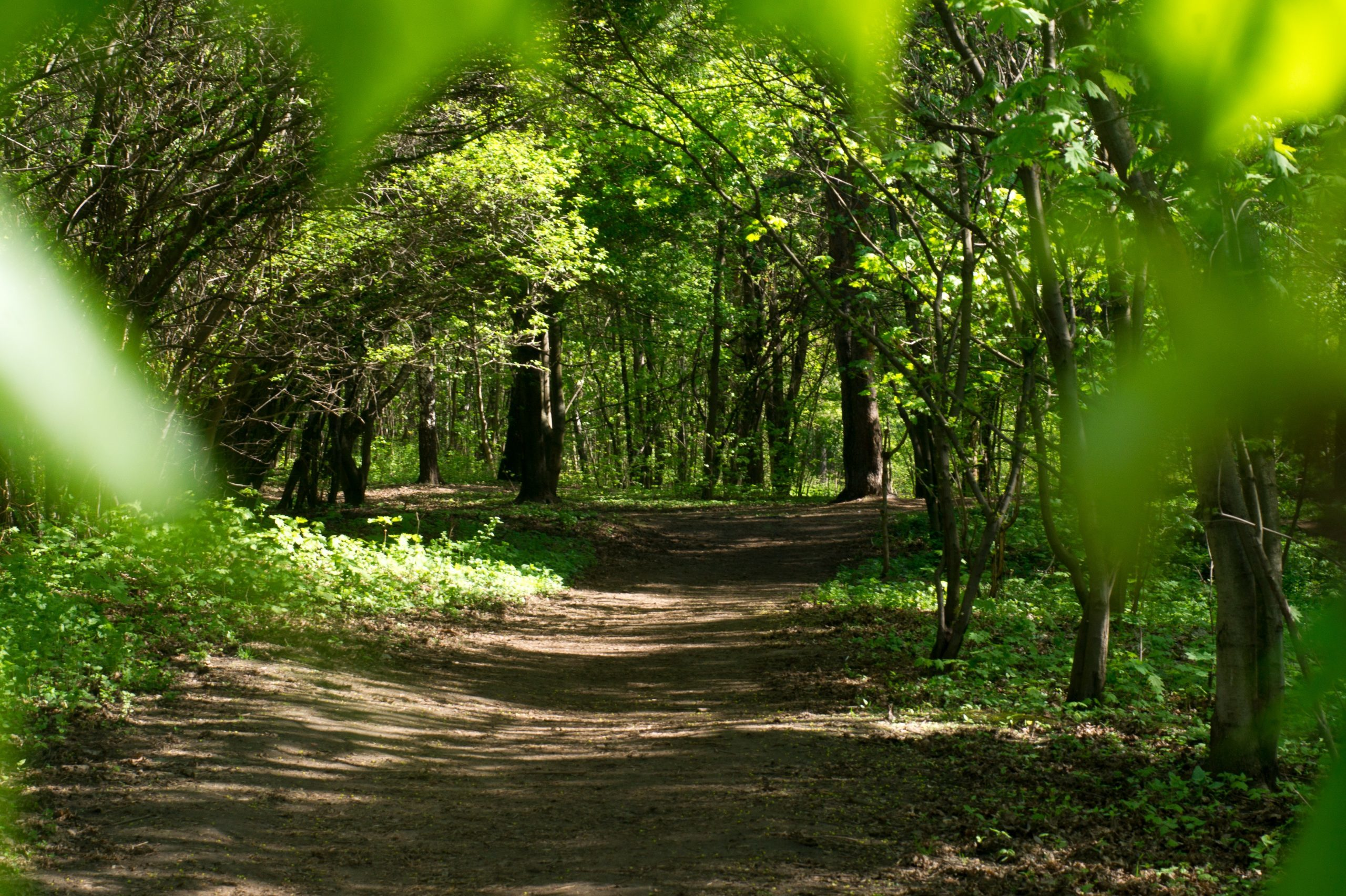 Hypnotherapy Healing Path